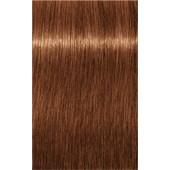 INDOLA - PCC Red & Fashion - 6.4 Dark Blonde Copper