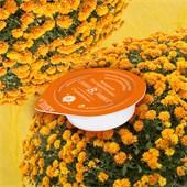 Chiara Ambra - Masken - Chrysanthemum Sleeping Mask Chrysanthemum Sleeping Mask