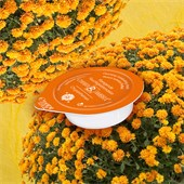 Chiara Ambra - Masken - Antifaz crisantemos Antifaz crisantemos