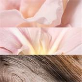 Jil Sander - Sunlight Lumière - Body Cream