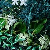 Molton Brown - Body Lotion - Coastal Cypress & Sea Fennel Body Lotion