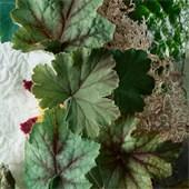 Molton Brown - Body Lotion - Geranium Nefertum Body Lotion