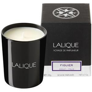 Lalique - Home - Candle Fig Tree - Amalfi
