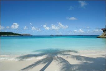 Vanille West Indies